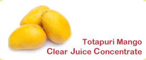 Totapuri Mango Frozen Clear Juice Concentrate