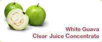White Guava Frozen Clear Juice Concentrate