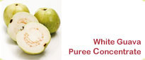 White Guava Puree Concentrate