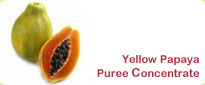 Yellow Papaya Puree Concentrate